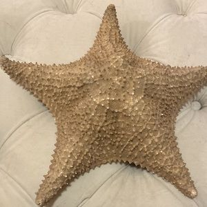 Real Giant Starfish for Nautical Decor